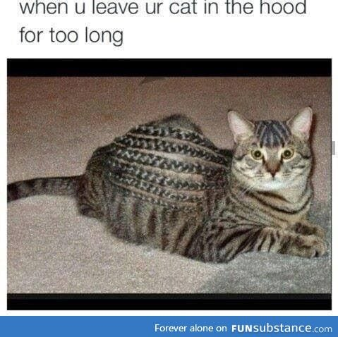 Hood cat
