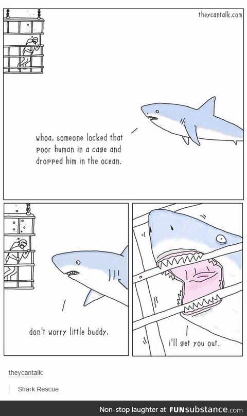 Good guy shark