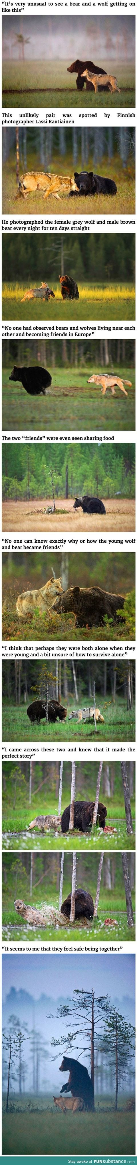 Best Friends - Bear and Wolf