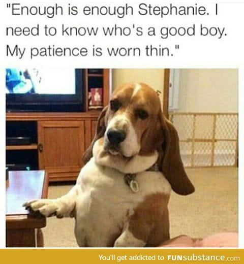 No more patience for this dog