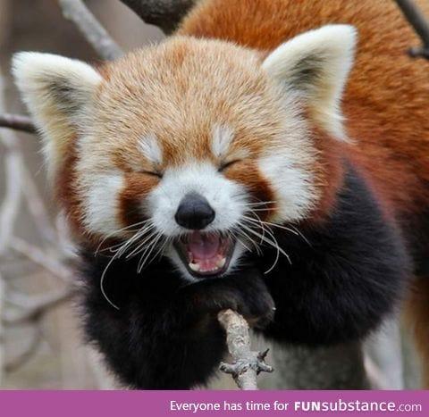 Day 298 of your daily dose of cute: pan pan panda