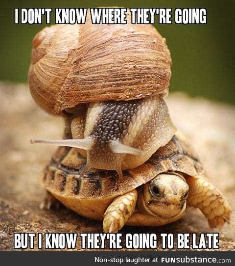 A snail riding a turtle...