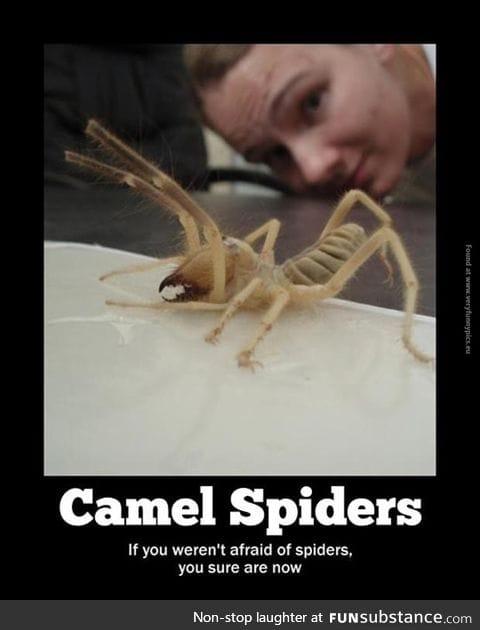 Caution arachnophobes