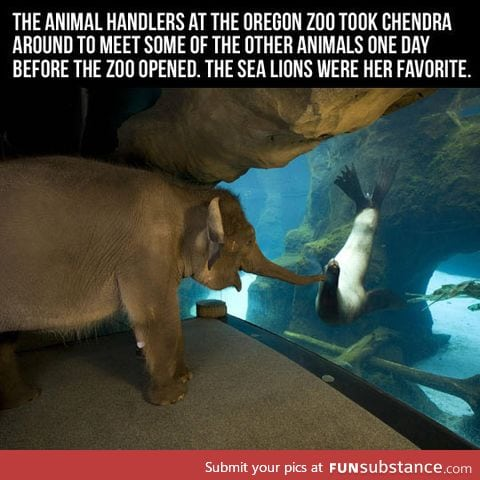 An elephant visiting a sea lion