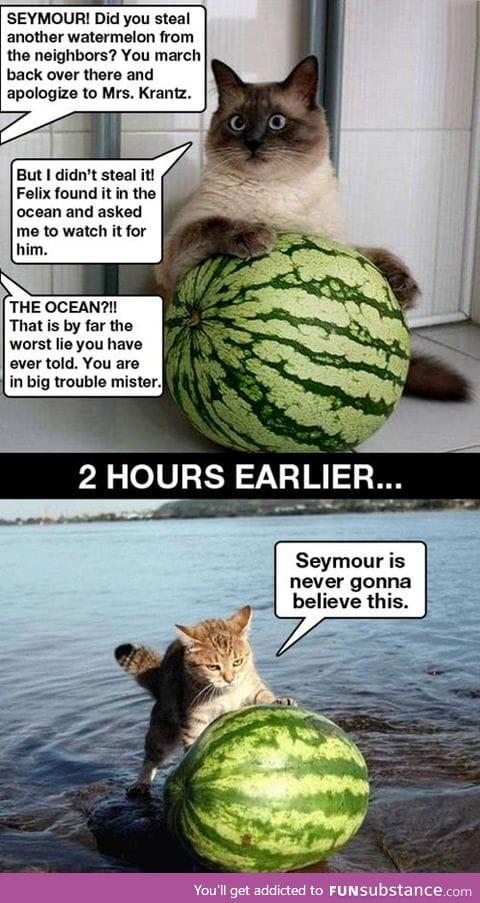 Seymour is a good cat, seymour never tells lies