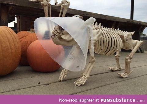Veterinarian's Halloween display is on point