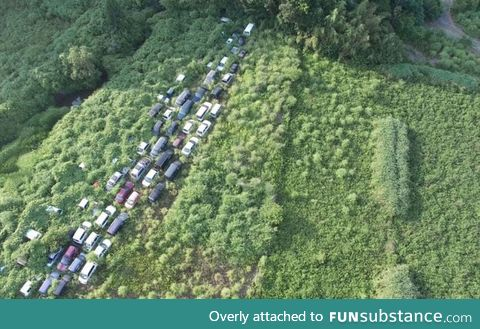 Nature quickly reclaiming the Fukushima nuclear disaster exclusion zone