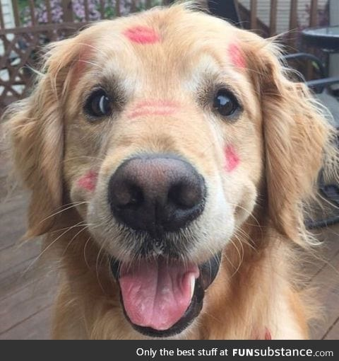 Pup got some smooches... Aww