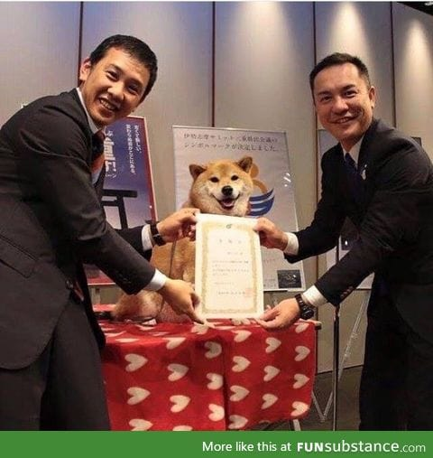 This doge got an award for being a doge