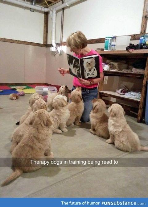 Good dogs. :)