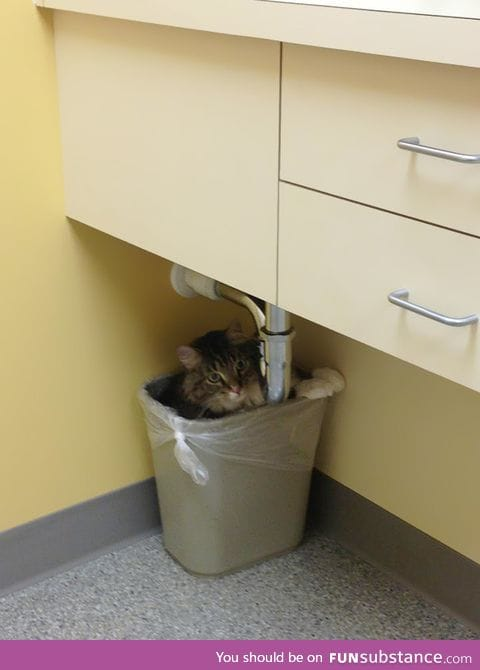 The vet will never find me here