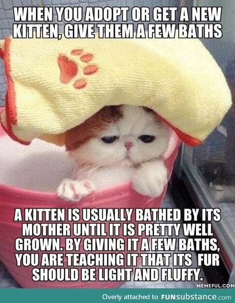 Here's a tip from an experienced cat owner