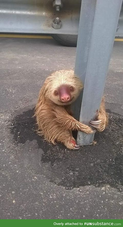 Adorable, but frightened sloth rescued from highway