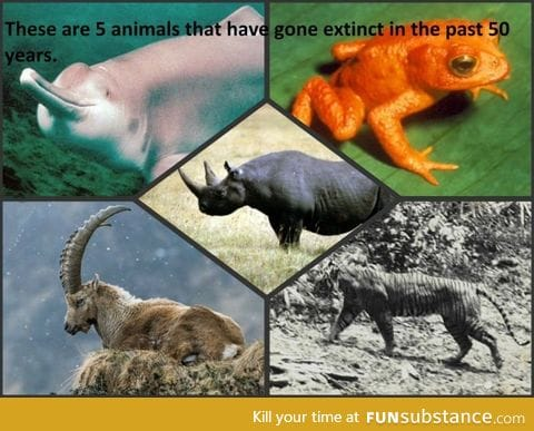 Before arguing about round/flat earth, argue about how we can prevent animal extinction!