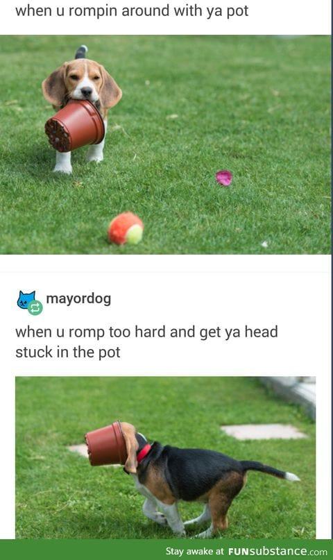 rompin'