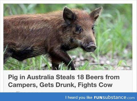 Australia in a nutshell