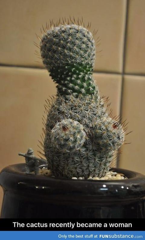 Female cactus