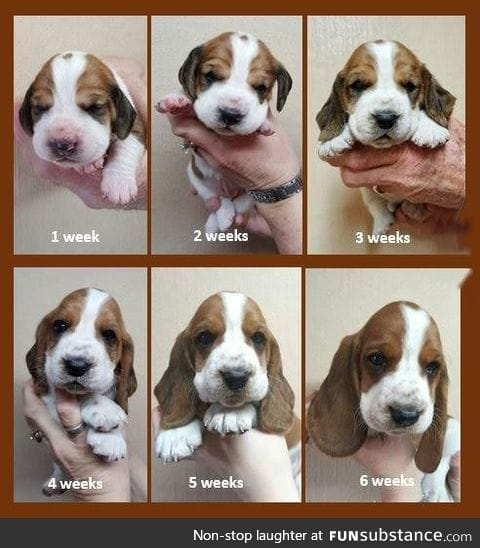The evolution of a puppy