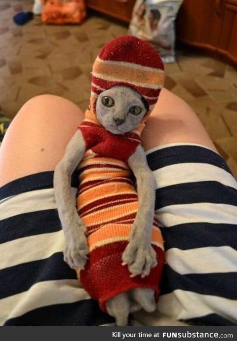 """Master has given Dobby a sock!"""