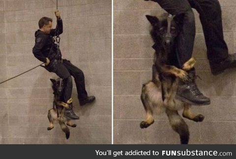 Vancouver Police dog learning to rappel with his partner