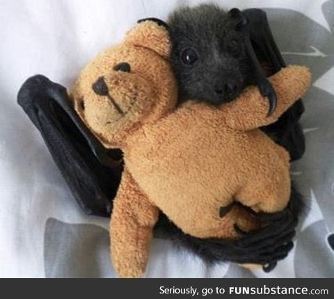 Baby bat loves his teddy bear
