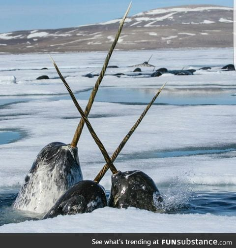 Let's all take a moment to appreciate the fact that Narwhals are real