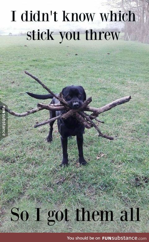 Which stick did you throw again?