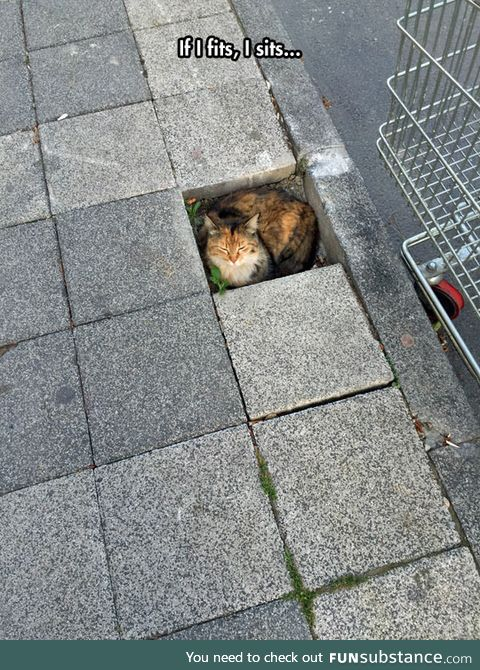 Cats can sits and fits anywhere