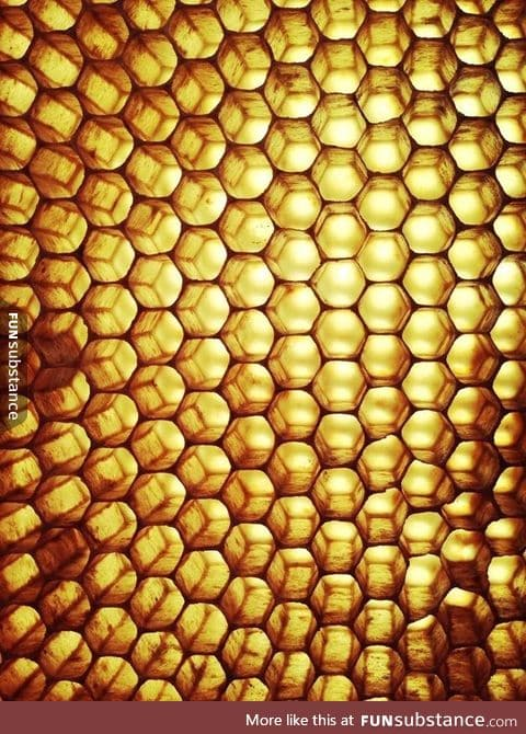 Honeycomb from a beehive held up to the sun