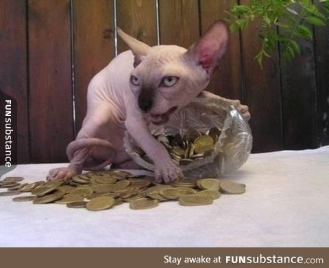One seriously greedy cat