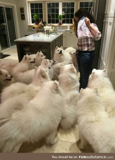this is almost enough dogs.