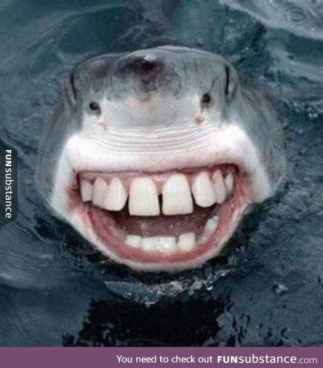 If sharks had human teeth