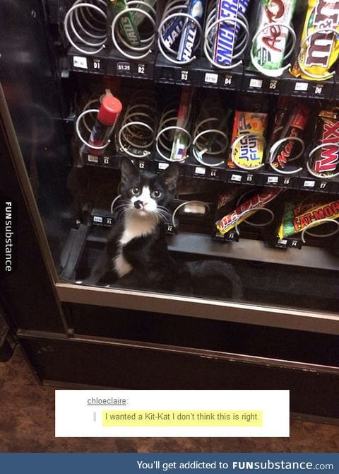 Vending machines are getting weirder