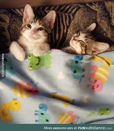 All tucked in!