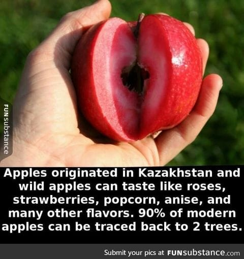 What an apple