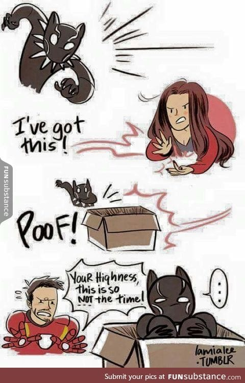 Kitty sees a box, kitty wants