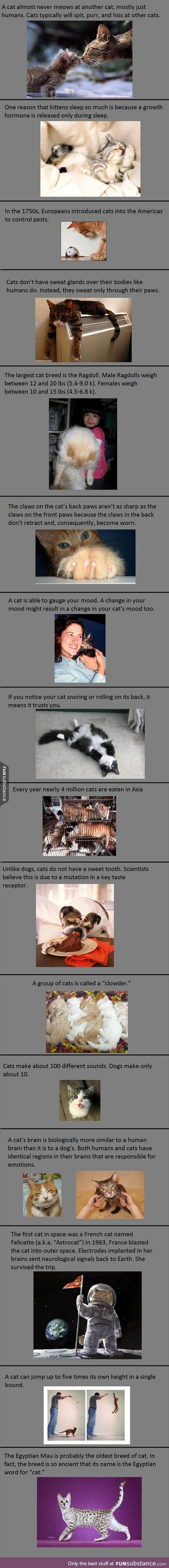 Interesting Cat Facts You Probably Don't Know