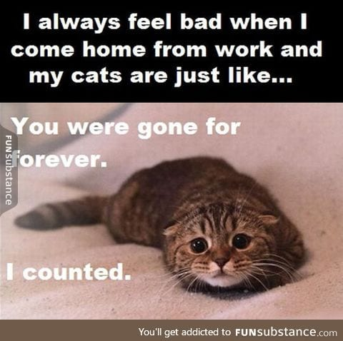 Whenever I leave my cat alone