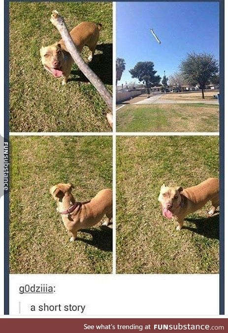 Every dog ever