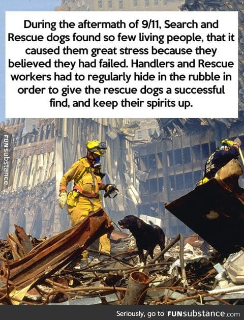 More proof that dogs are too good for this world
