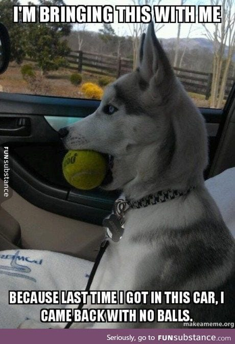 This dog has some trust issues