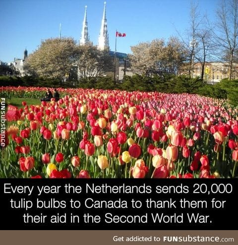 The Netherlands is grateful