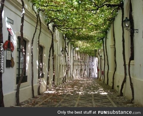 It took years to create this natural canopy