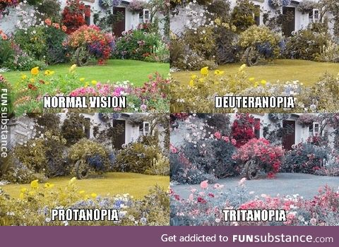 Some of the types of colorblind (sorry for those who are colorblind and can't see)