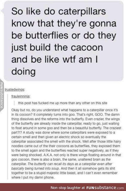 caterpillars y'all