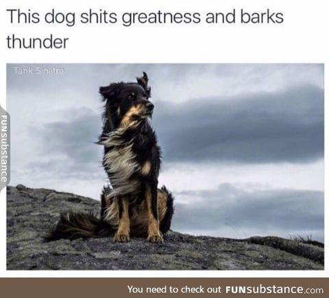 Doggies are heavens sent