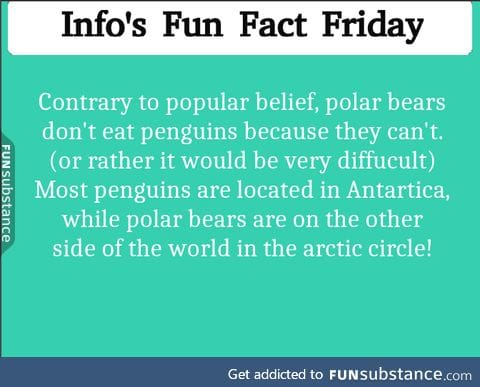 Polar Bears aren't THAT mean