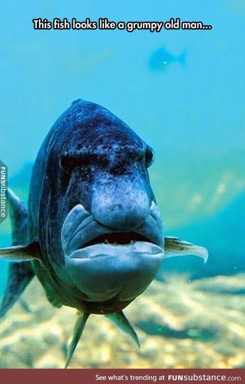 Get off my reef