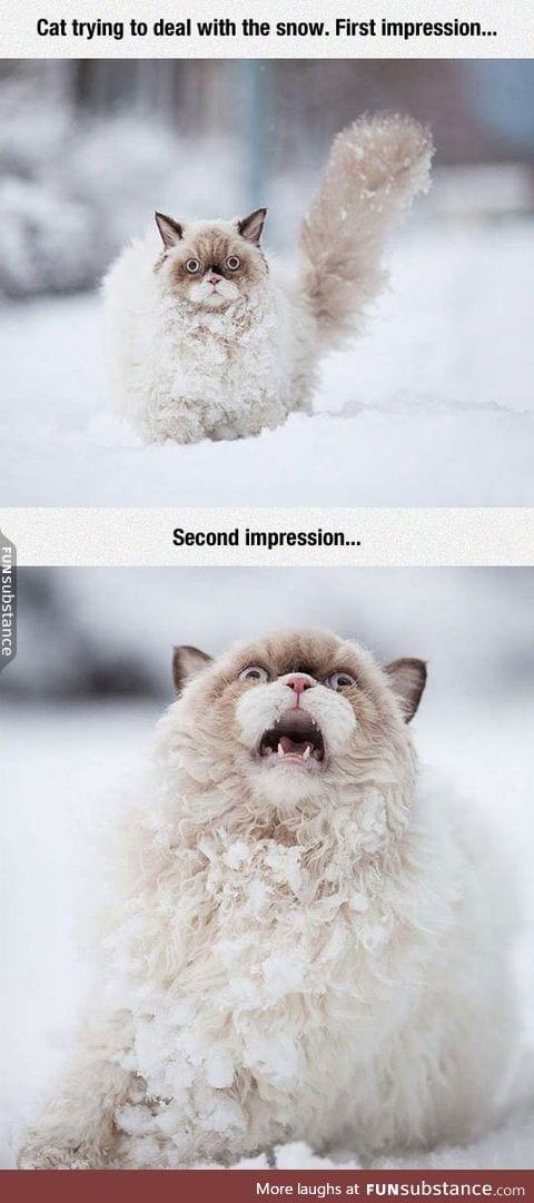 Cat vs. Snow