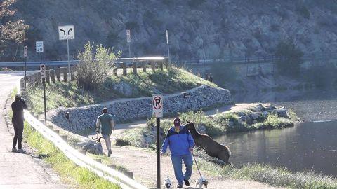 Elk helps motivate a jogger